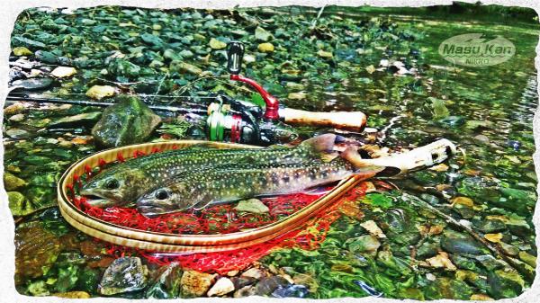 1607242鬼怒川支流の沢の岩魚