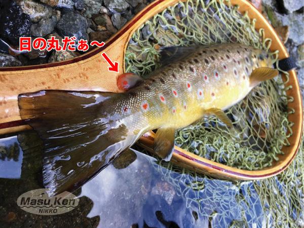 1608271大谷川の日の丸ブラウン